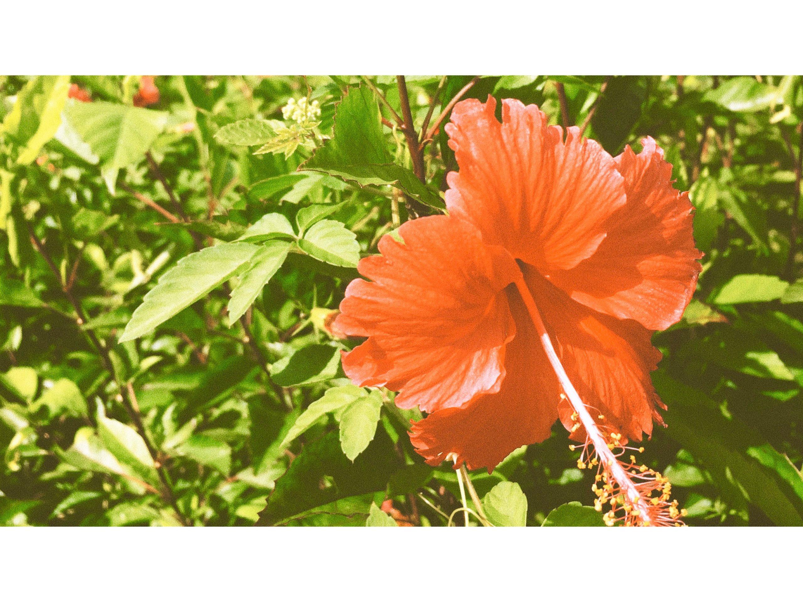 【沖縄ホテル おすすめ】女子旅・男旅・卒業旅行・若い世代向け 5選
